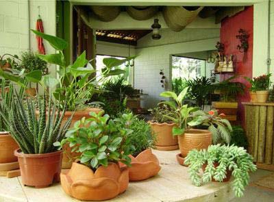 Jardinagem plantas que podem ser colocadas dentro de - Plantas para interior de casa ...